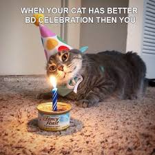 when cat has better birthday than me russian memes
