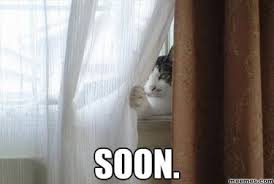 Soon Meme - image soon meme cat window jpg animal jam roleplay wiki