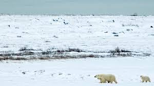 native plants in the tundra habitats san diego zoo animals u0026 plants