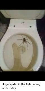 Huge Spider Memes Image Memes - 25 best memes about spider in the toilet spider in the