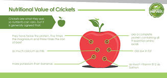 benefits of crickets u2014 tomorrow u0027s harvest