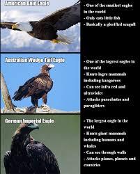 America Eagle Meme - nazi eagle vs american eagle