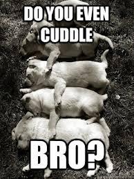 Cuddle Meme - cuddle so hard memes quickmeme