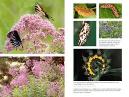 benefits of native plants bringing nature home how you can sustain wildlife with native