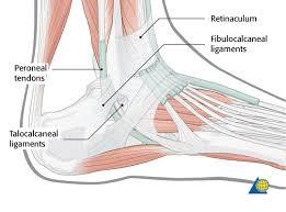 Anatomy Of The Calcaneus Calcaneus Approach Mio Lateral Approach Calcaneus Displaced