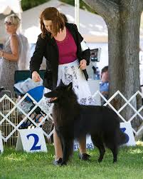 belgian sheepdog kennels dogbreedz photo keywords belgian sheepdog