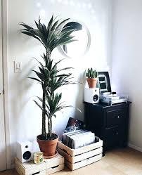 floor plants home decor plants for home decor related posts floor plants home decor