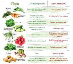 beginner vegetable garden layout gardensdecor com