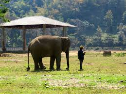 why you should never ride an elephant and what you can do instead