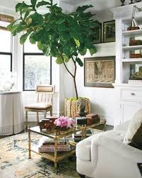 living room trees fiddle leaf fig living room interior decor ideas home time