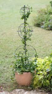161 best climbing frames for plants images on pinterest garden