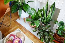low light outdoor plants 5 overlooked plants that can survive the dark almost apartment