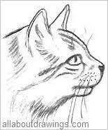 easy cat drawings