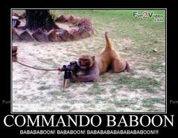 Baboon Meme - commando baboon funny monkey meme poster for whatsapp