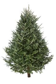 christmas tree dropping needles part 49 alternative wooden 4ft
