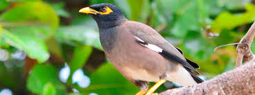 Hawaii Birds images Native or not hawaiian birds aren 39 t always what they seem jpg