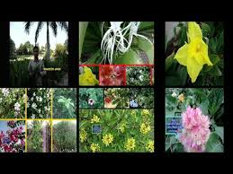 natural fresh flowers and plant ihome gardun growing flower