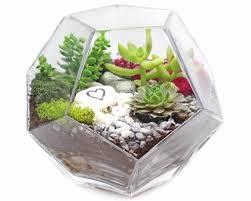 plant nite succulents in geometric prism glass terrarium u2013 wicked