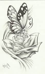 pencil sketches of butterflies on flowers butterfly on flower