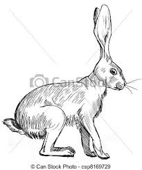 hare clip art and stock illustrations 15 022 hare eps