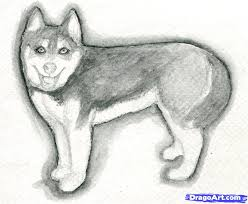 how to draw a realistic husky step by step realistic drawing