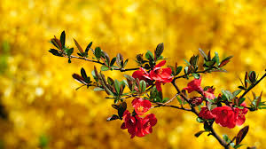 Flower Wallpaper Flower Wallpaper 3848 1920 X 1080 Wallpaperlayer Com