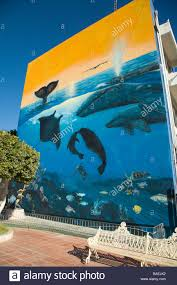 dolphin mural stock photos dolphin mural stock images alamy mexico la paz mural painting by wyland of sea of cortez wildlife on wall of downtown