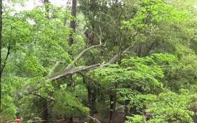 crew removing fallen trees at rock hill sc u0027s glencairn garden