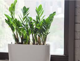 indoor plants singapore the most beautiful and easiest indoor plants to grow in your home