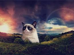 grumpy cat halloween wallpaper wallpapersafari