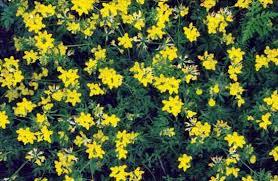 grow cover crops for the best garden soil organic gardening