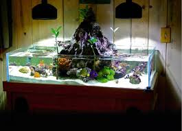 212 best aquariums images on fish tanks aquarium fish