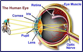 the order of which light passes through the eye pupil is the