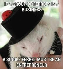 Ferret Meme - ferret meme kappit