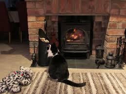 cat sitting u0026 feeding services in bedfordshire