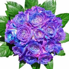 blue roses for sale purple and blue roses lime garden