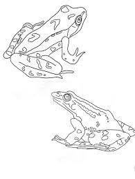 59 frogs images frogs frog coloring pages
