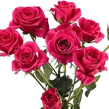 wholesale roses spray roses hot pink wholesale roses theflowerexchange