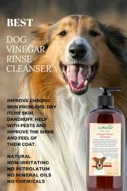 214 best dog remedies images on pinterest dog care pet health