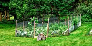 Types Of Garden Fencing Great Garden Fence Ideas For 2017 How To Build A Garden Fence