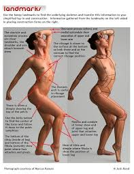Female Body Anatomy Drawing 184 Best Drawing Reference Anatomy Female Images On Pinterest