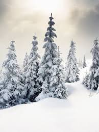 winter photography background 9267 winter