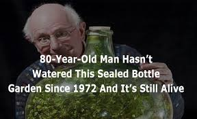 sealed bottle garden 80 year old man hasn t watered this sealed bottle garden since 1972
