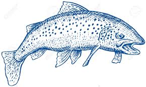 trout royalty free cliparts vectors and stock illustration