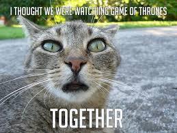 Memes Animals - sometimes animals make the best memes fun