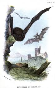 281 best bats bits images on pinterest animals baby bats and