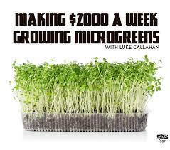 making 2000 a week growing microgreens with luke callahan pvp087