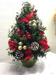 boxwood christmas tree boxwood tree in fairfield ct blossoms at