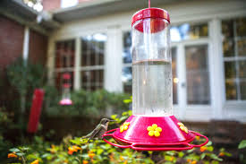 How Do You Spell Backyard How To Create A Hummingbird Friendly Yard Audubon