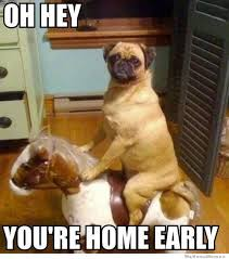 Dog Funny Meme - oh hey you re home early weknowmemes